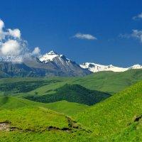 высокогорные луга Дагестана :: Илья Скупой