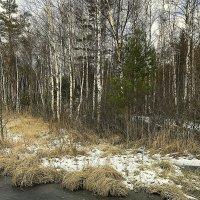 Зимний лес. :: Валентина Жукова