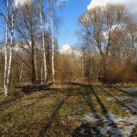Февраль похожий на апрель :: Андрей Лукьянов