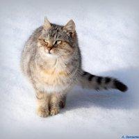 Ух, солнышко какое, аж глазам больно! :: Андрей Заломленков