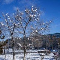 Птицы зимой :: Анатолий Чикчирный