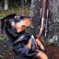 Одна из моих собак :: Kostas Slivskis