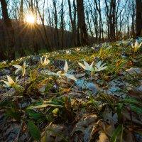 Цветы, как бабочки :: Фёдор. Лашков