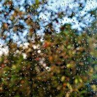 После летнего дождя :: Вадим