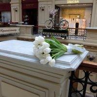 Белые тюльпаны-скромный знак внимания, счастья пожелание. :: Люба