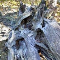 Сухое дерево :: Денис Бочкарёв