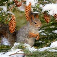 В зимнем лесу1 :: Влад