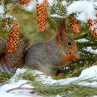 В зимнем саду2 :: Влад
