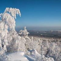 Панорама зимы :: Vladimbormotov