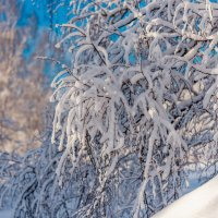 Про снег... :: Виктор