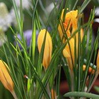 Февральское цветение :: ZNatasha -