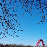 Весна идёт... :: Ирина - IrVik