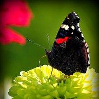 гармония от природы :: Олег Лукьянов