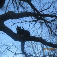 Кот на дереве :: Maikl Smit