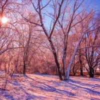 Наконец зима пришла... :: Виктор Малород