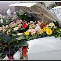 На выставке цветов :: Алексей Дмитриев