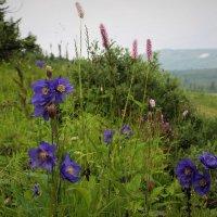 Цветы у дороги :: Сергей Чиняев