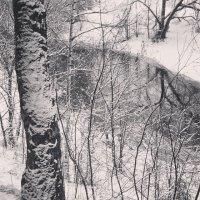 Графика зимы 3 :: Ксения Черных