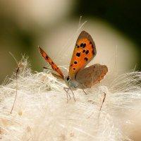 опять про бабочек...15 :: Александр Прокудин