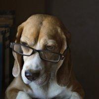 Пёс учёный :: Тата Казакова