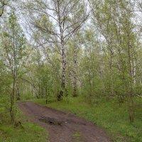 Первые листья :: Николай