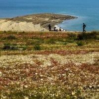 Иудейская пустыня цветет :: Адик Гольдфарб
