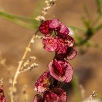 цветы пустыни 2 :: Адик Гольдфарб