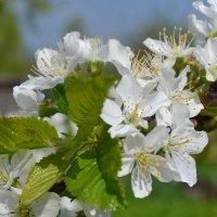 Вот и весна ! :: zoja