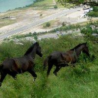 Весенняя любовь лошадей... :: Георгиевич