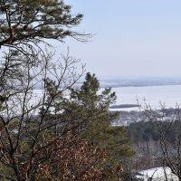Вид на реку Зея :: Елена Пивоварова