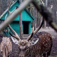 В Зоопарке 3 :: Рита Куприянова