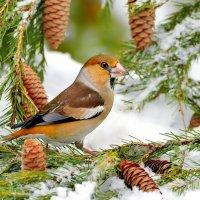 Зарисовка из зимнего леса 10 :: Влад