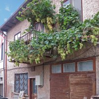 виноград на балконе :: ИРЭН@ .