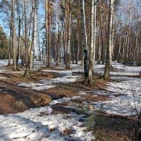 Март -месяц весенний :: Galina Solovova