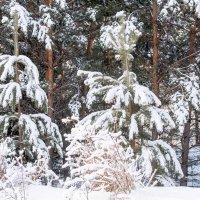 зимний лес :: Сергей Тонких