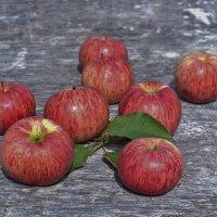 красные яблочки :: Александра Климина
