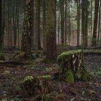 В старом лесу ... :: Va-Dim ...