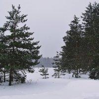Снежок :: Евгений Кочуров