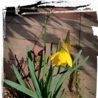 весна семимильными шагами... :: maxim