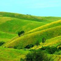 Алтайские зелёные просторы. :: Штрек Надежда