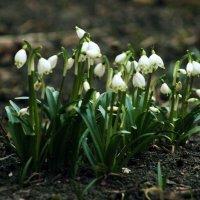 Весна :: Наталья Преснякова