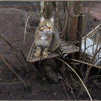 Бездомный кот Арбуз :: Вера