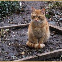 Бездомный кот :: Вера