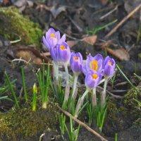 Новая весна :: Syntaxist (Светлана)