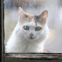 А за окошком - кошка :: Canon 77 ---