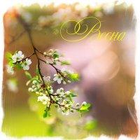 вот и пришла весна! :: Эльмира Суворова
