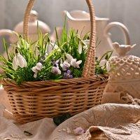 Весенний подарок :: Ольга Гукова (Olka-rada5)