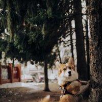 Лесные истории :: Анна Пушина