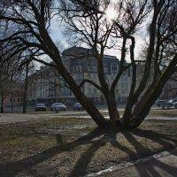 Тень в солнечный день :: Валентина Папилова