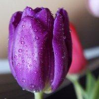 Весенняя красота :: Зинаида Каширина